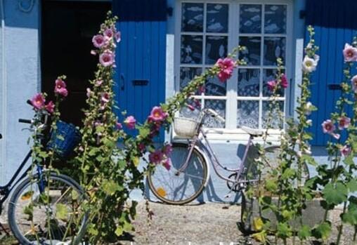 Roses trémières et porte bleue