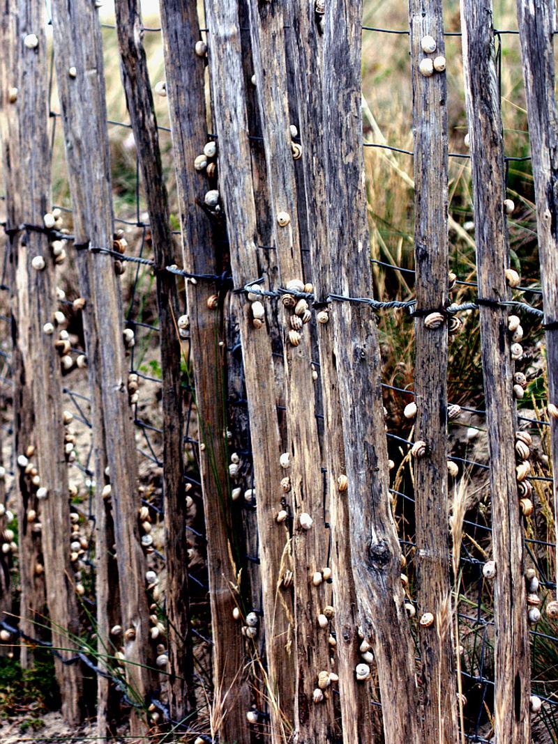 La gironde aux escargots - La Couarde - Ile de Ré - 17  posté lemercredi 18 février 2009