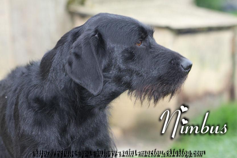 Nimbus - nouvelles photos