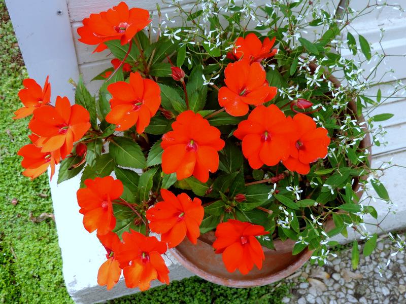 Fleurs de juillet - août...