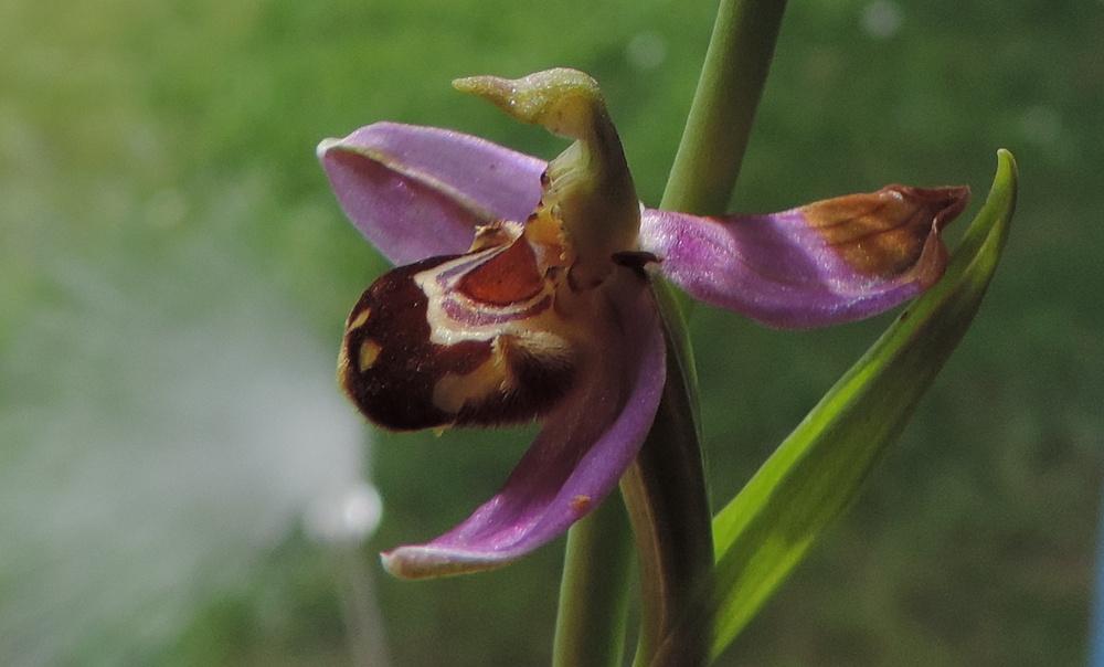 une orchidée sauvage