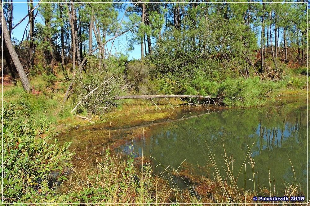 L'étang de Surgenne - Septembre 2015 - 6/10