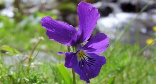 Photo de fleur en Auvergne