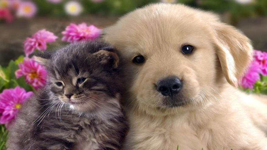 18/3/21 : Papas animaux qui ont adopté des petits protégés