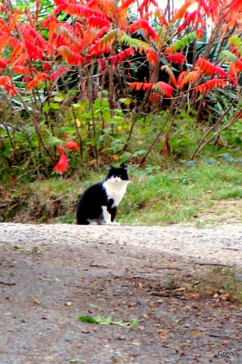 Un chat en automne
