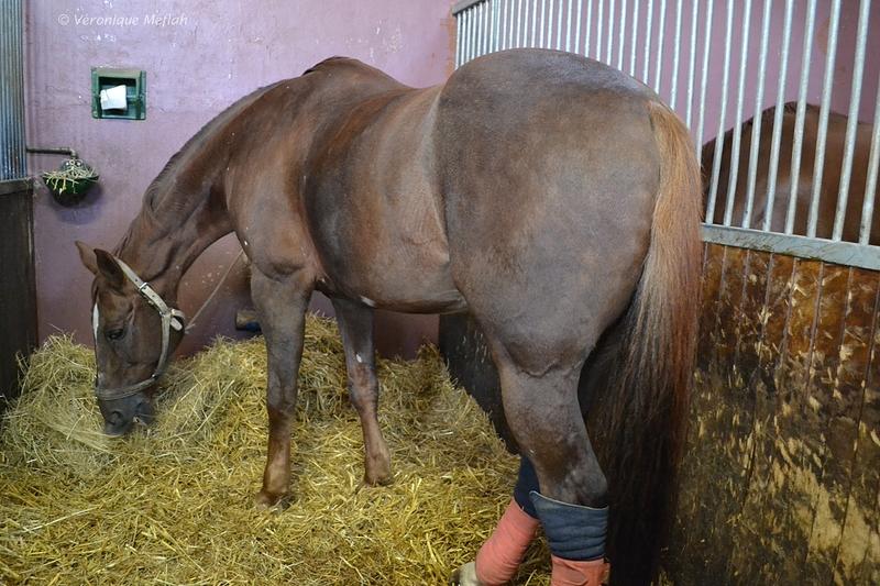 Quartier des Célestins, la Garde Républicaine : Les chevaux