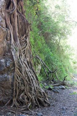 Retrouver ces racines