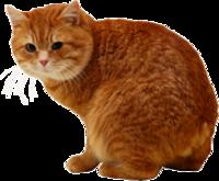 Cicák
