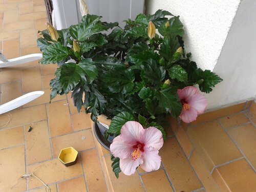 mes fleurs  ; mes plantations salades  , radis et oignons blanc , ...