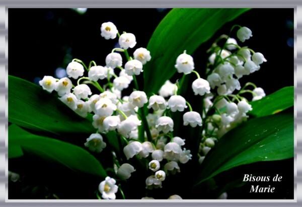 Bouquet-de-muguet1.jpg