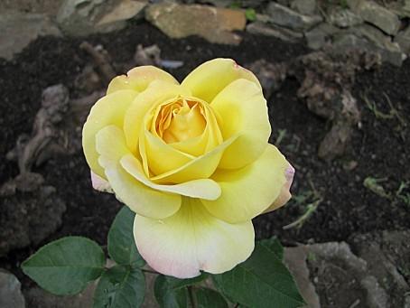 fleurs-5009.JPG