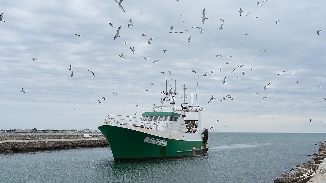 Grau du Roi : Un port de pêche. (Suite et fin)
