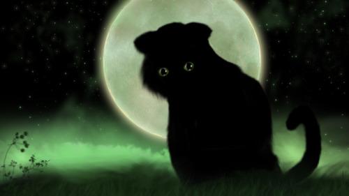 Chat noir, vous voulez lui faire un câlin au matou ?
