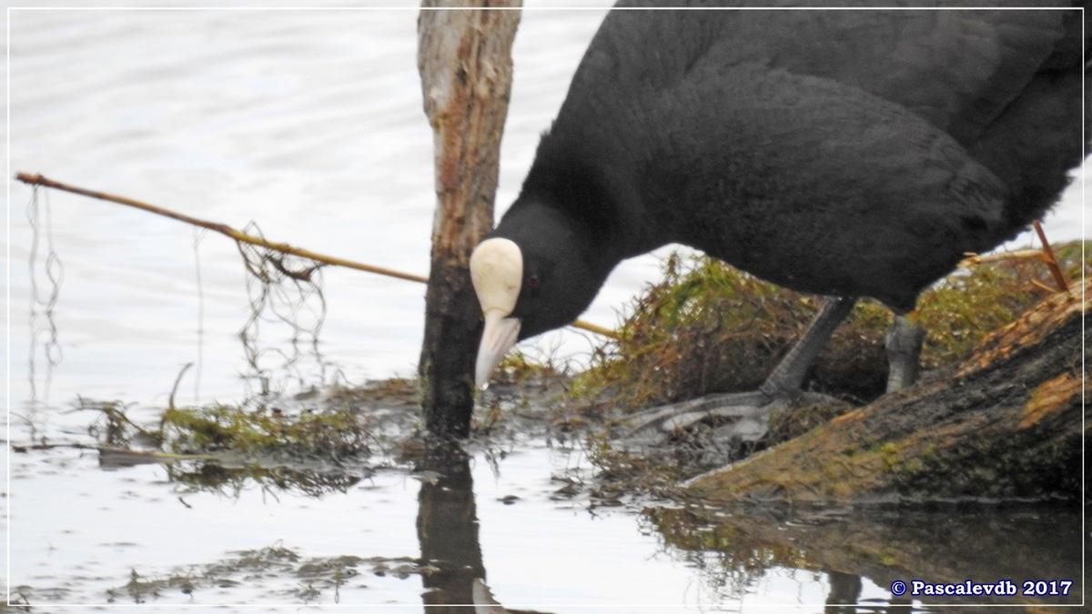 Réserve ornitho du Teich - Mars 2017 - 1/15