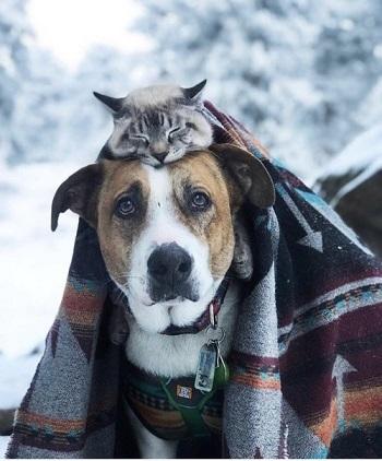 Chien et chat ...