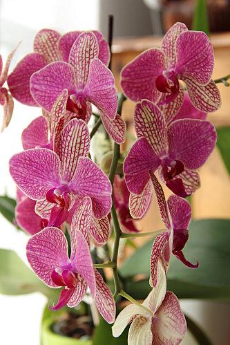 orchidee-petite-violette--4-.JPG