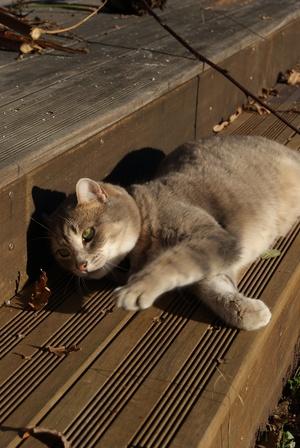 Cachou se prélasse au soleil du 23 décembre
