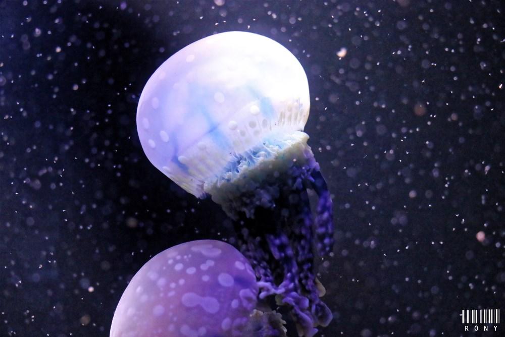Le monde fascinant des méduses