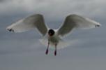 Galeries Oiseaux