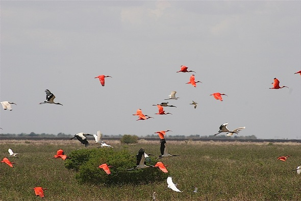 visite dans une réserve d'oiseaux ; de beaux flamants roses.