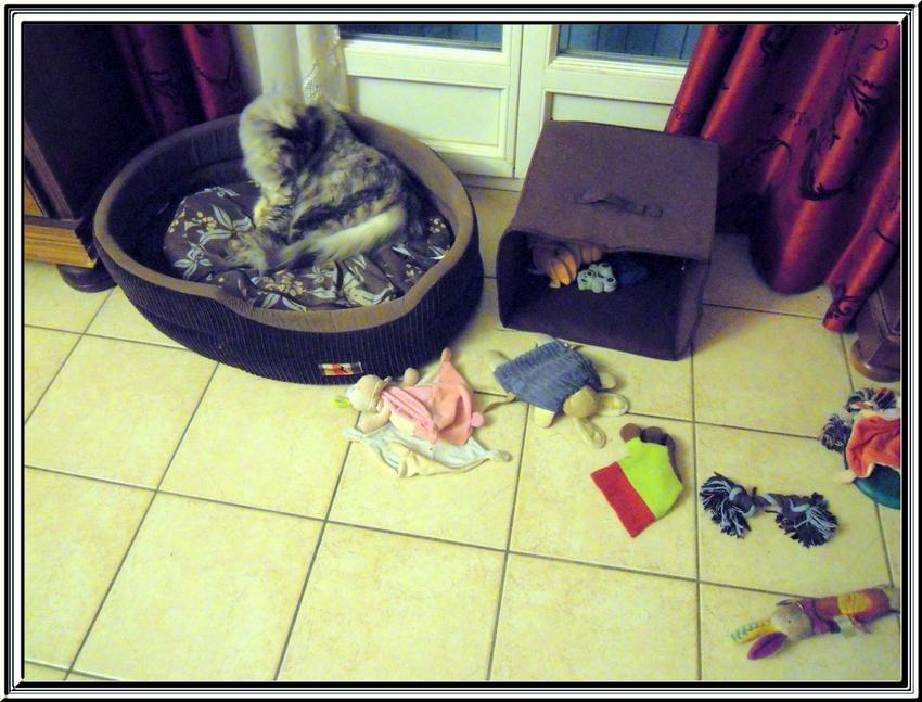 Miss Blue et ses jouets