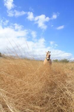 avec Jovis dans la savane de l'Ile aux Poneys