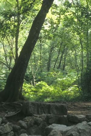 Forêt de Brocéliande