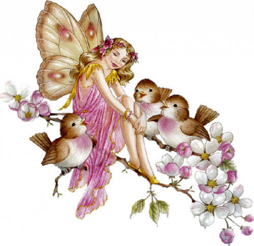 chaton-papillon