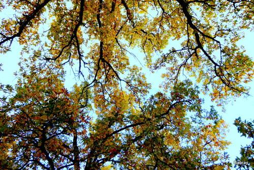Les chênes du petit bois