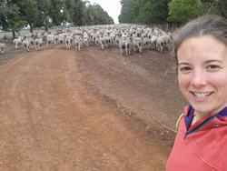 Comment changer 1000 moutons de champ de 10 leçons