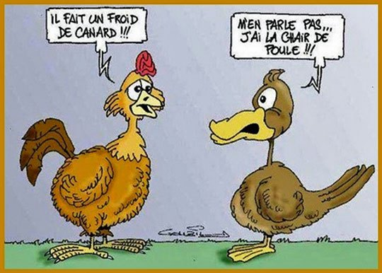 froid chair de poule