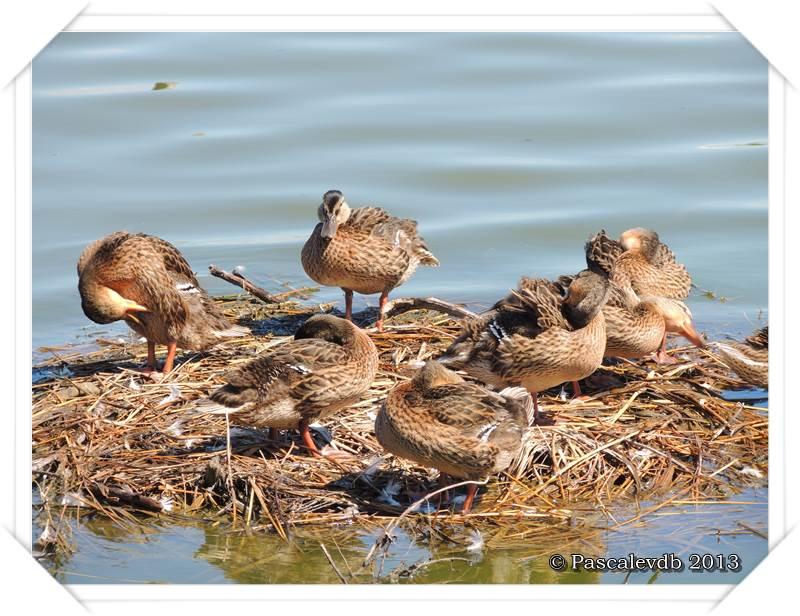 Pause ornithologique estivale au Teich - 6/12