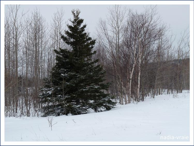 """Paysages d'hiver le 6 janvier.(Instant T"""""""