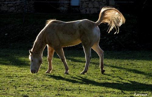 Le clic clac du vendredi : le cheval de lumière