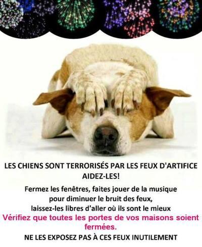 les chiens et le 14 juillet (France) ou/et le 21 juillet (Belgique).
