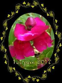 balade au jardin et jardiner avec la lune du 11 au 20 juin