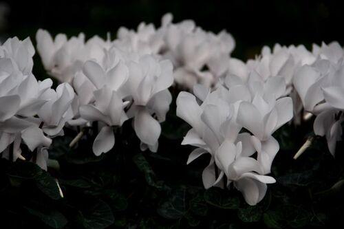 C'est le printemps à Famiflora (3/7)