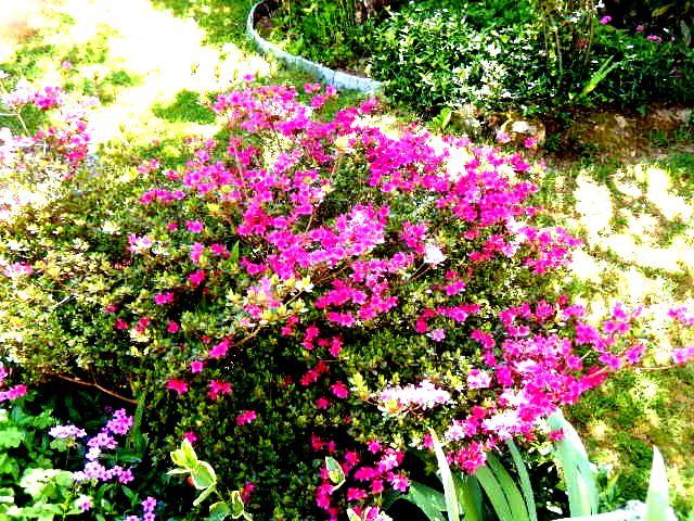 Quand le Jardin éclate en ce mois de Mai