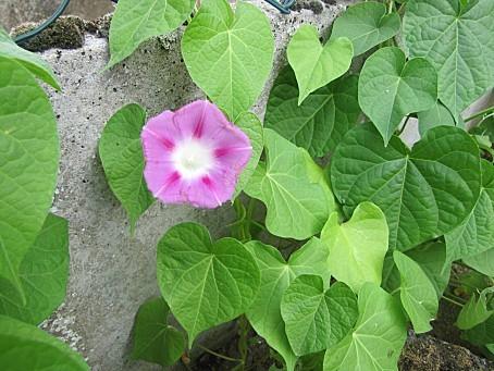 fleurs-7423.JPG