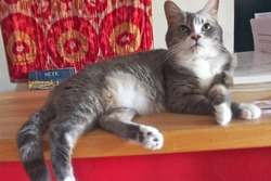SOS FERMETURE DES KABOULI KATS, 12 kaboulis restent à adopter !