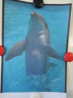 """Cinquième exposé """"Les dauphins"""""""