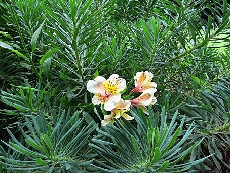 le-parc-des-Herbiers-0039.JPG