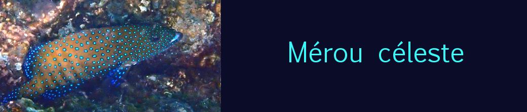 mérou céleste