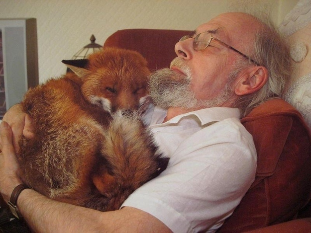mixed species, fox and human