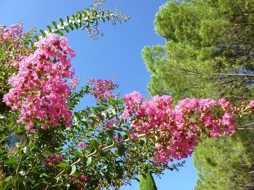 Fleur de provence