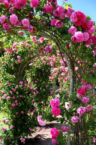 Fêtes des Roses 2018 à Gerberoy