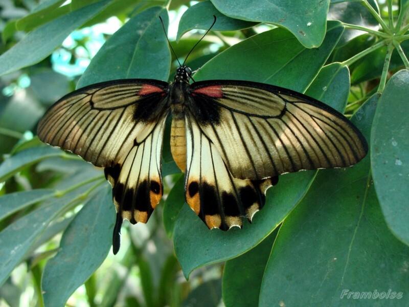 Volière à Papillons du Château de Goulaine