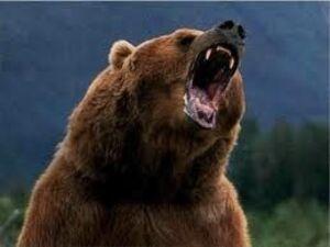 L'ours et la chenille...