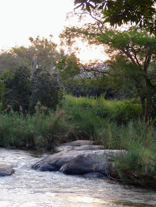 parc naturel Krüger; quelques images de la végétation;
