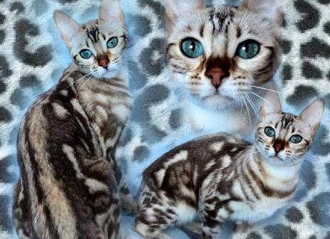 Uncia8295753-bw-leopard-peau-arriere-plan-ou-la-texture-grande-resolution